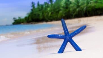 étoile de mer bleue