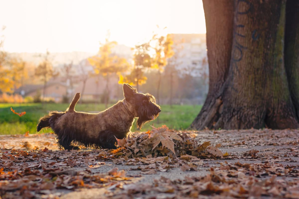 chien gratte