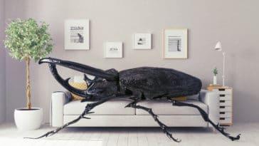insecte maison