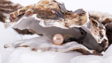 huître perle