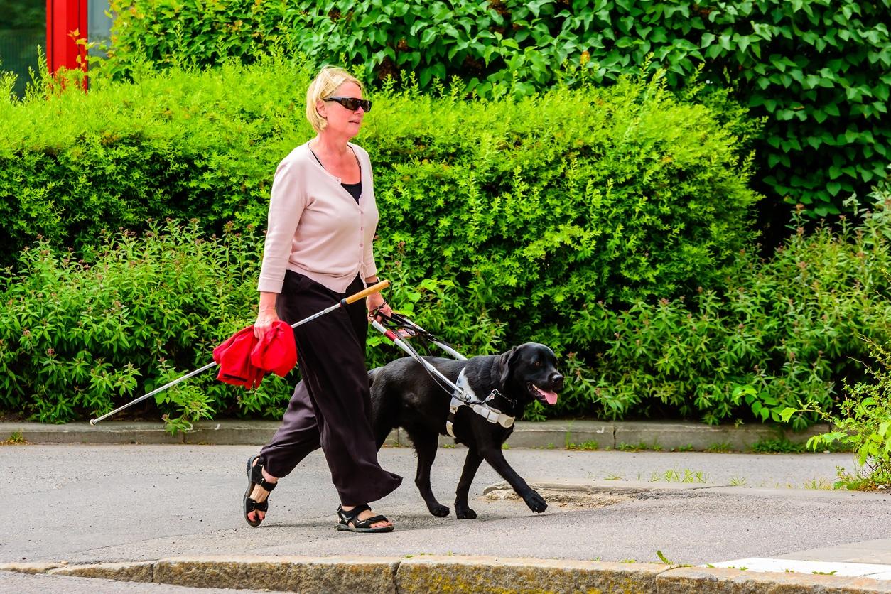 chien d'assistance personne handicapée