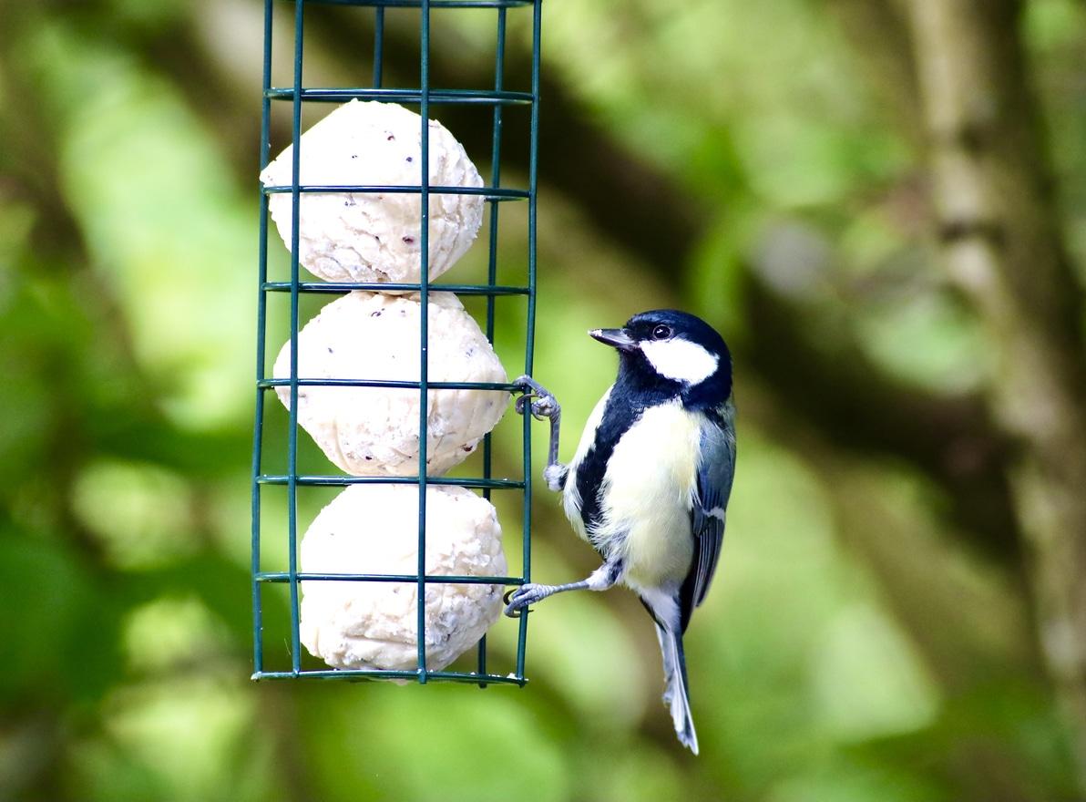boules de graisse pour oiseaux