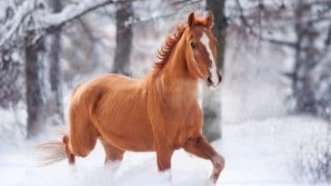 crottin de cheval