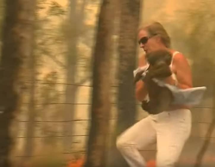 koala incendie Australie