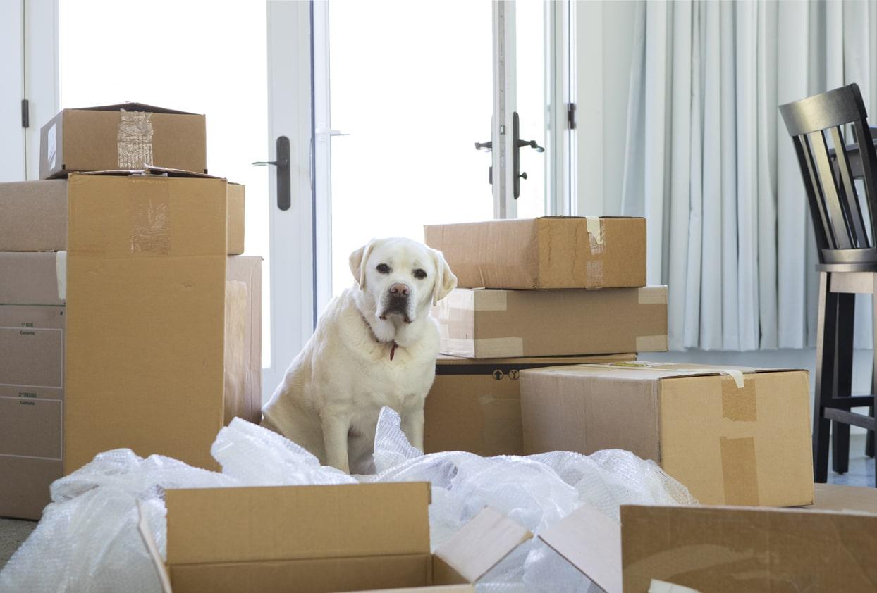 chien déménagement carton