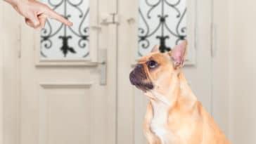 chien réprimande punition