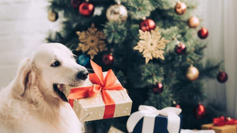 chien cadeaux de noël
