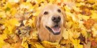chien feuilles mortes