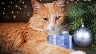 chat cadeaux de noël