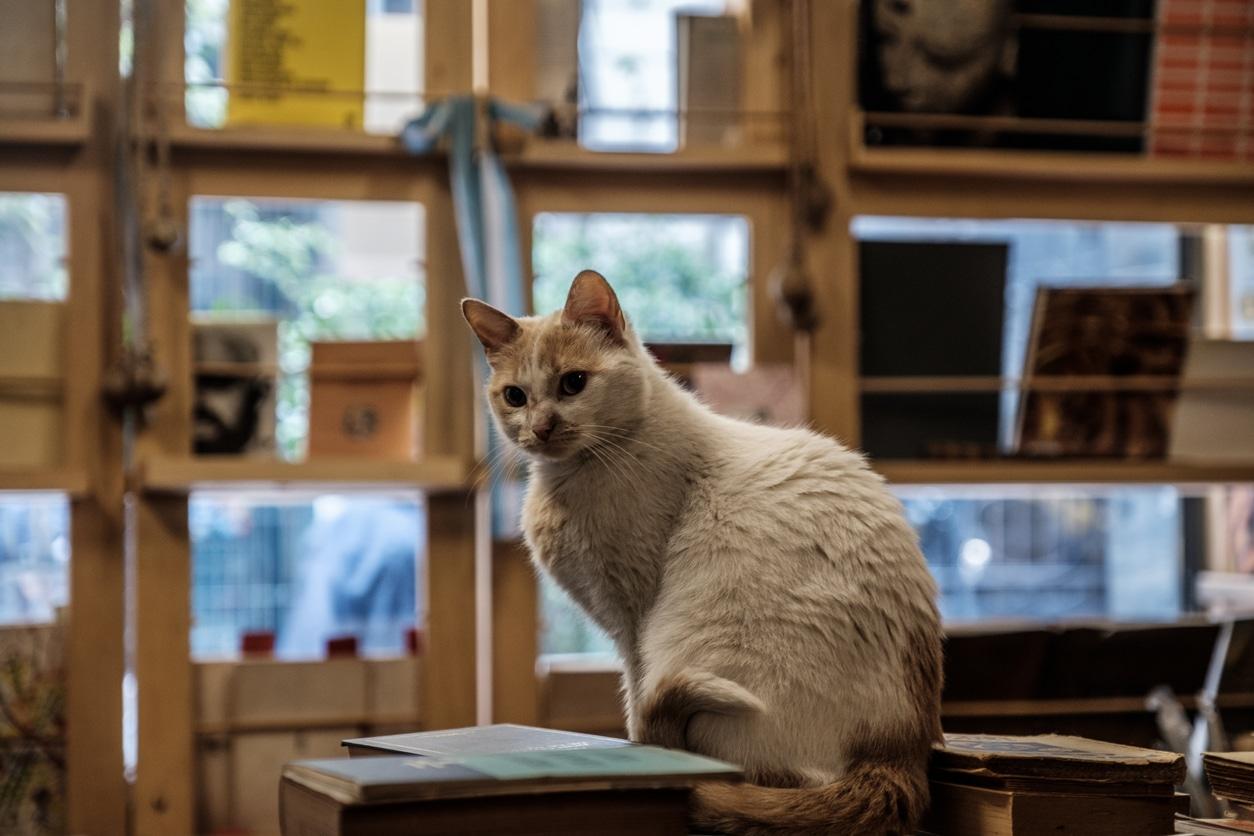 chat librairie bibliothèque