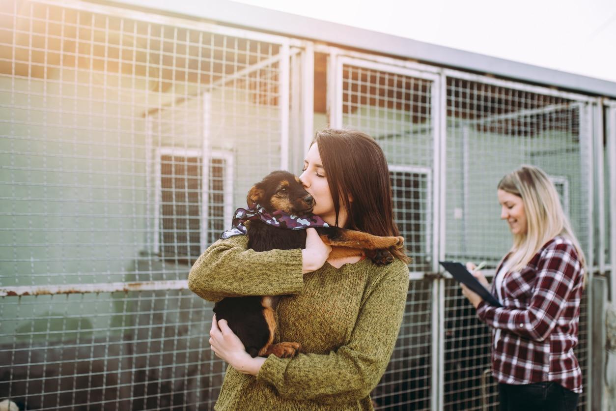 adoption chien refuge
