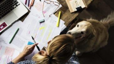 chien labrador études travail