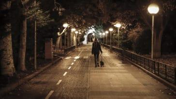 promenade chien nuit