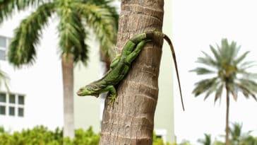 iguane vert arbre