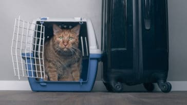 chat voyage caisse transport