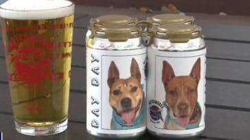 chien Hazel canette bière