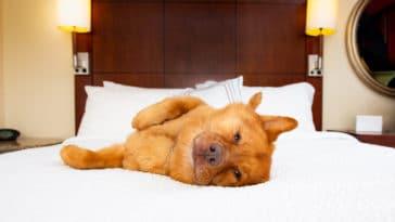 chien hôtel