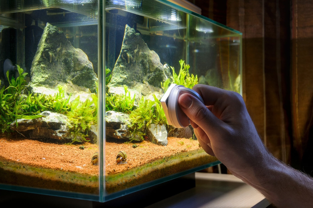 aquarium nettoyage