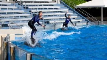 surf dauphin parc SeaWorld