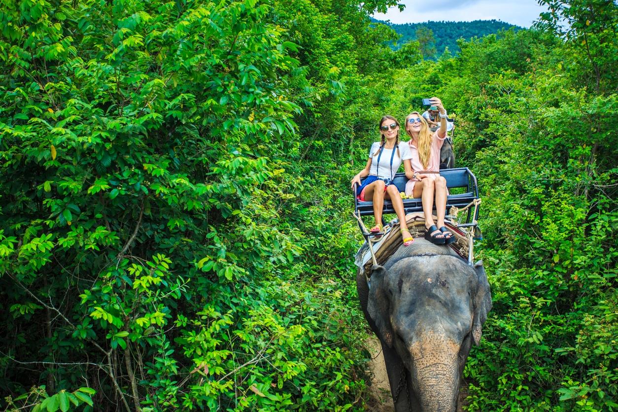 éléphant Asie tourisme