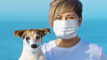 coronavirus animaux