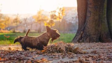 chien gratte sol