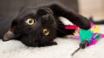 chat noir jeu