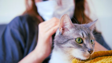 chat masque maladie coronavirus