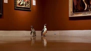manchots musée