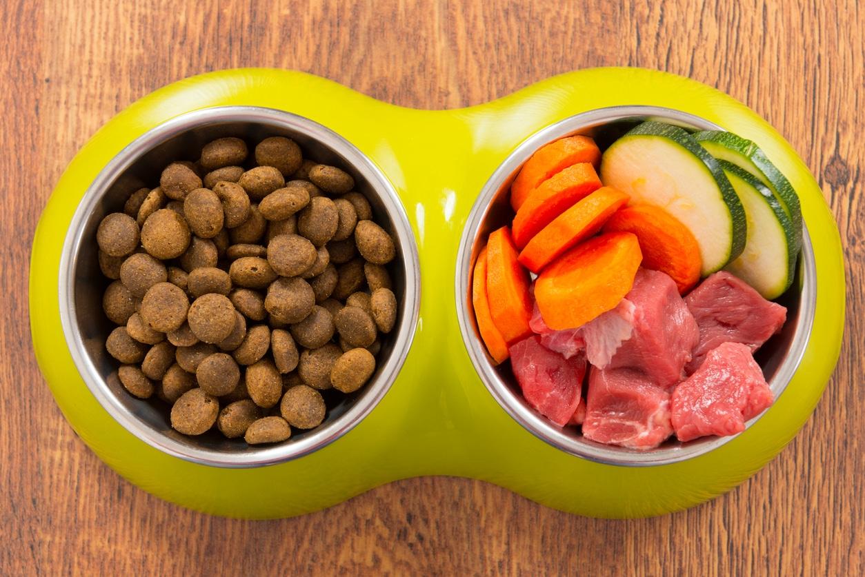 gamelle comparative croquettes et ration ménagère