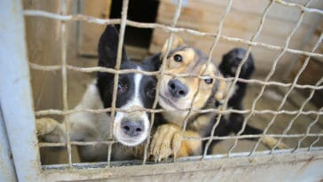 chien cage refuge