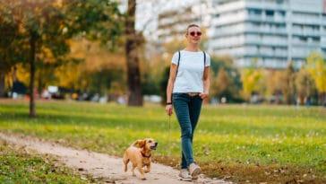 chien promenade exercice