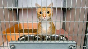 chat refuge adoption cage
