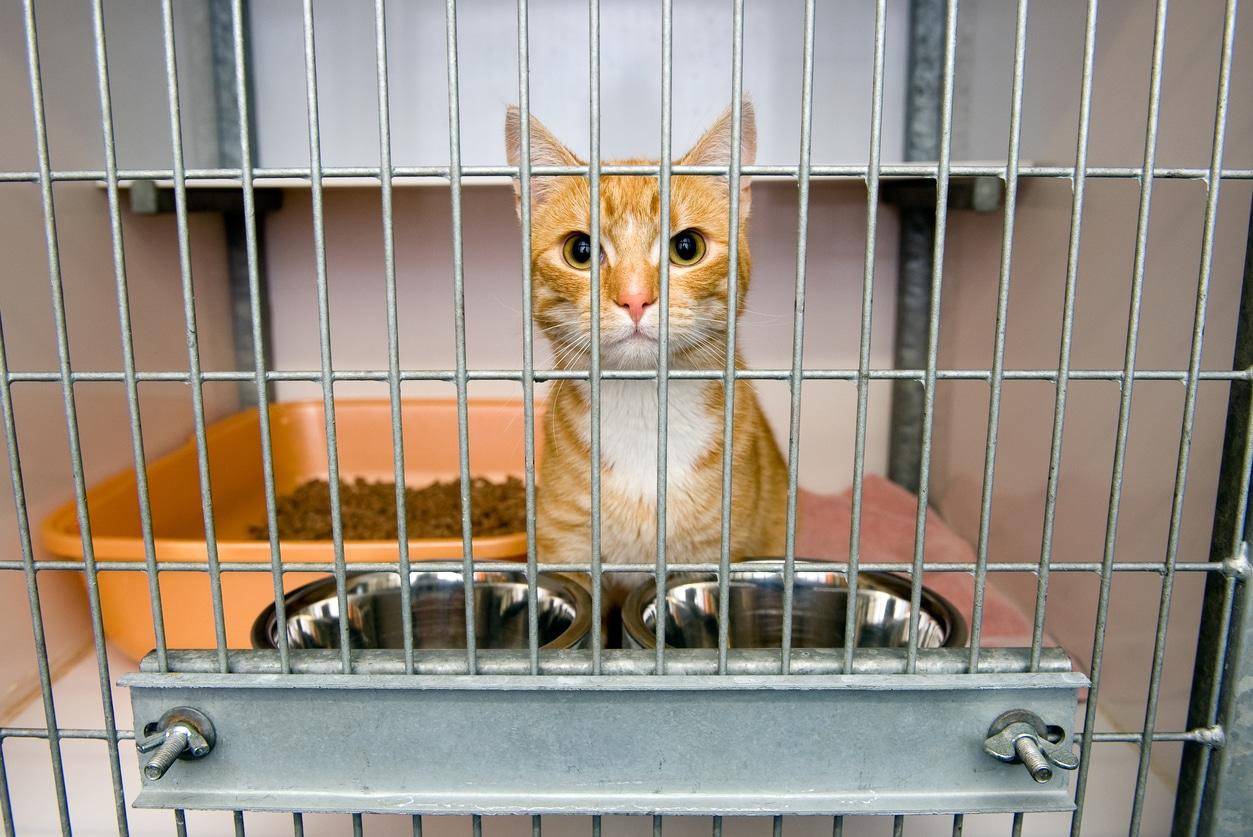 chat refuge adoption cage