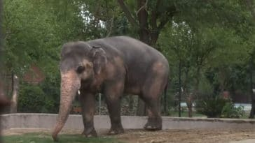 kaavan elephant zoo