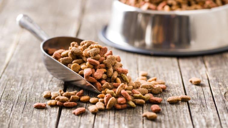 croquette chat chien nourriture doser dosage gamelle nourrir