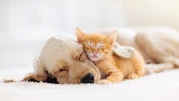 chien chiot câlin dort