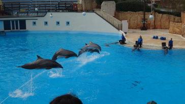 spectacle dauphin Parc Astérix