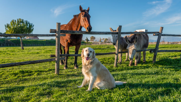 chien, ânes et cheval dans un pré