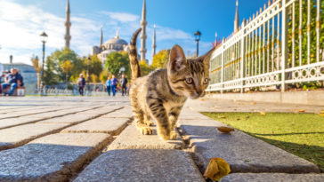 chat Turquie Istanbul
