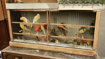 oiseaux cage marché Paris île cité