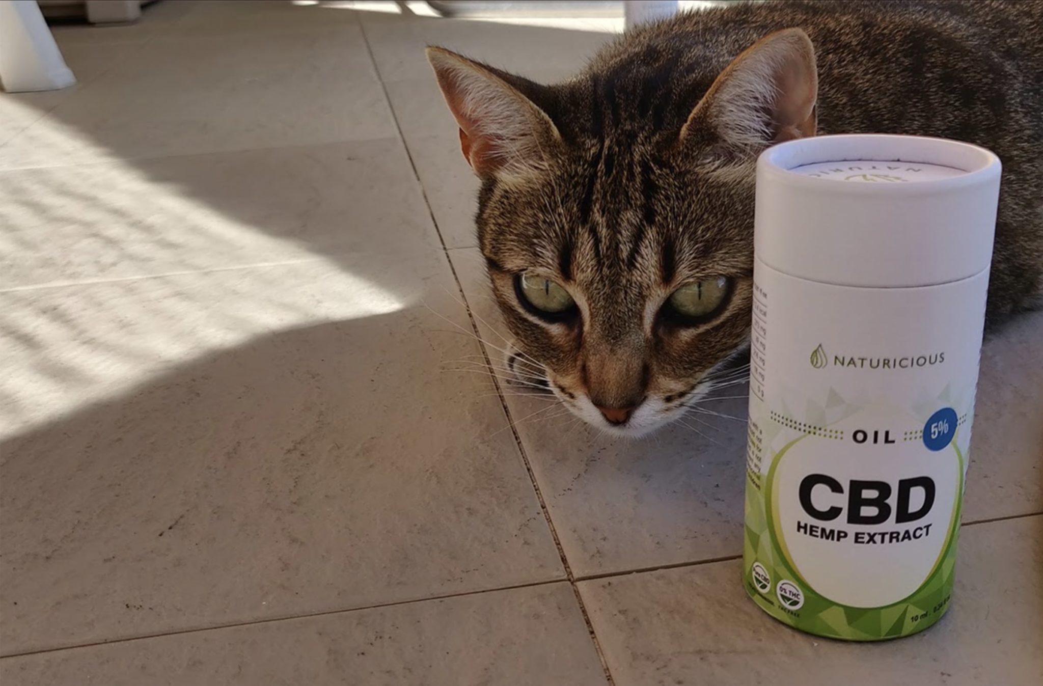 chat et huile de CBD Naturicious