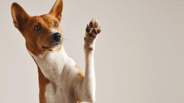 chien donne patte