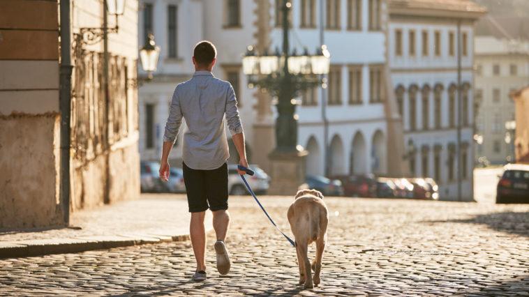 chien dans une ville