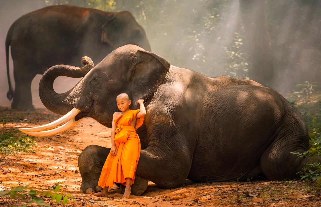 éléphant thaïlande