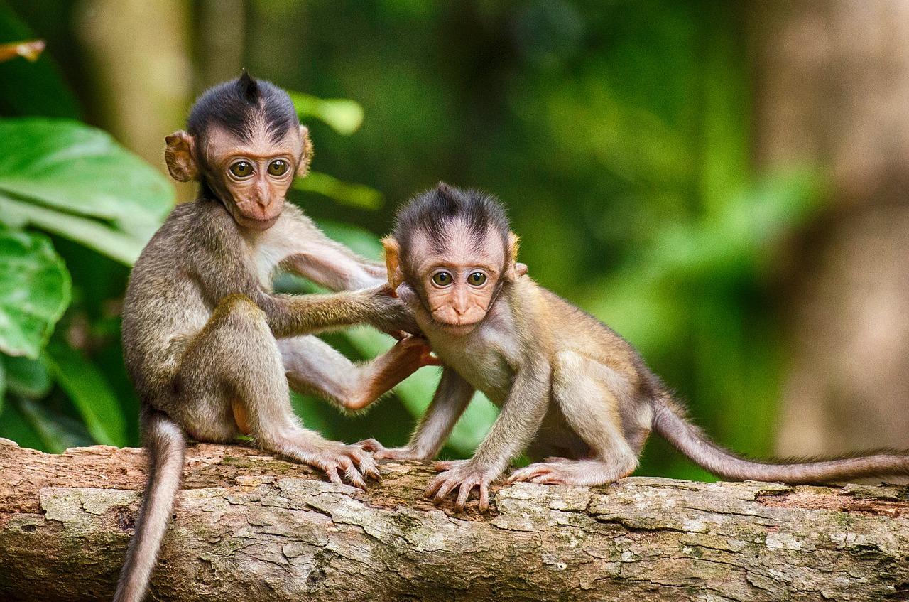 bébés singes forêt documentaire animalier