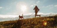 canicross chien et son maître dans une prairie