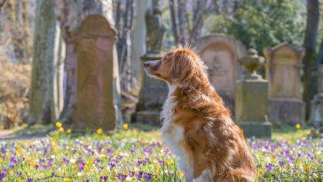 chiens assis devant des tombes fleurs
