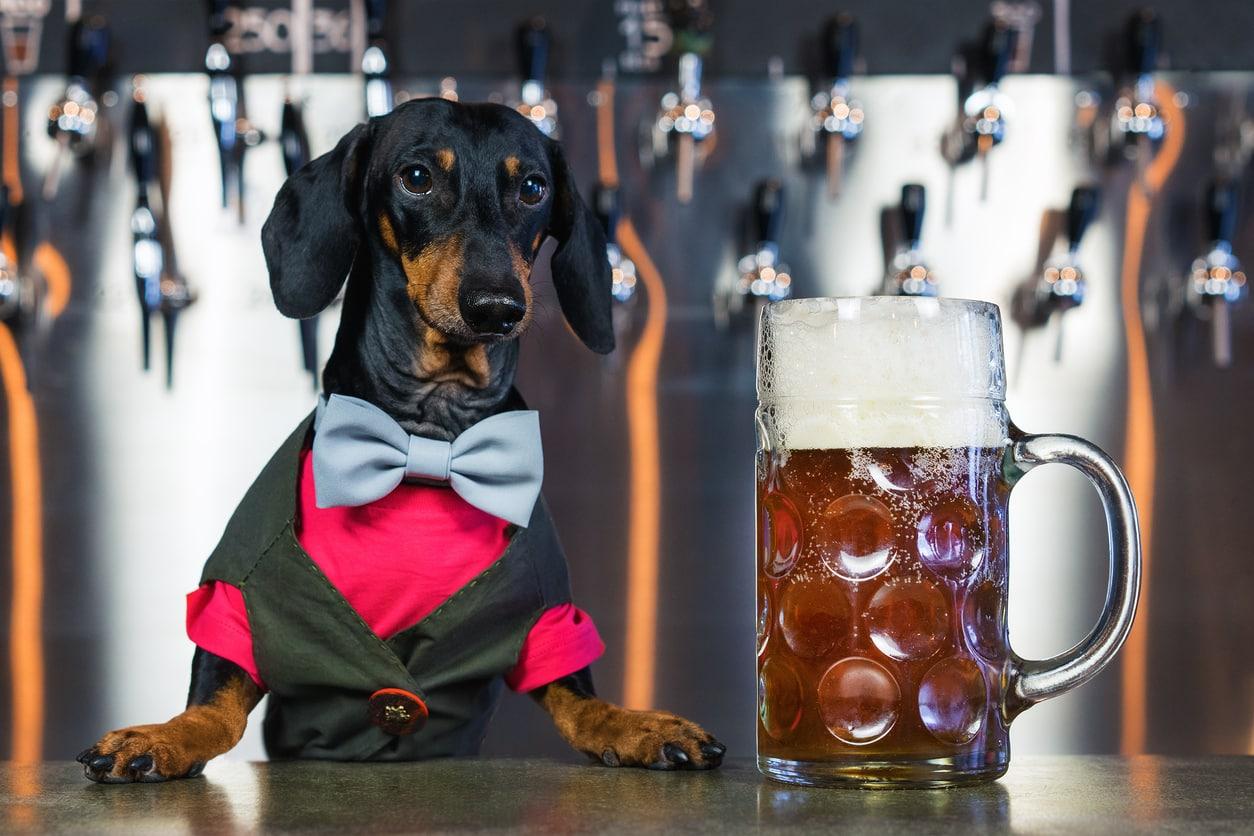 chien au bar avec une bière