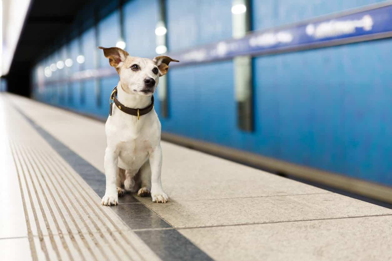chien qui attend le métro